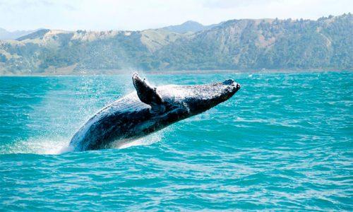 ballenas.en_.cayo_.levantado.02